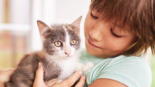 Como promover o convívio seguro entre crianças e pets
