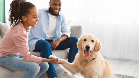 familia feliz pet dog cachorro